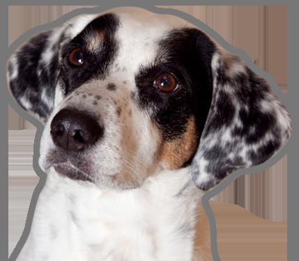 Sie suchen einen Tierarzt oder eine Kleintierklinik in Oldenburg?