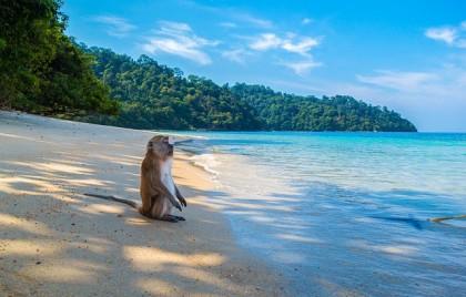 monkey-3251530_640
